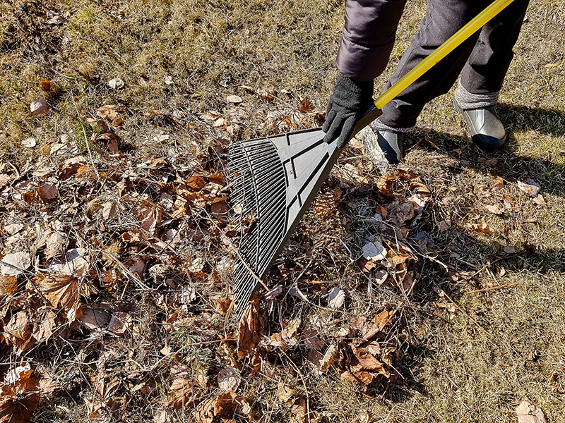 Spring and Fall Cleanup Brampton